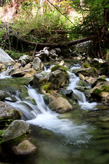 19 - Limekiln SP (tinyfroglet) Tags: california trees creek waterfall bigsur redwoods limekilnstatepark