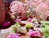 """Dogwood Pink • <a style=""""font-size:0.8em;"""" href=""""http://www.flickr.com/photos/101656099@N05/9733564859/"""" target=""""_blank"""">View on Flickr</a>"""