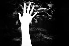 0025 (László Vidók) Tags: ethereal body backlit dark spotlight girl art hand fish aquarium surreal surrealism touch emotion sense bw black white minimal photo best picture visual photography canon pics blackandwhite blackwhite