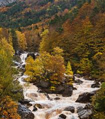 Selva de Oza (Popewan) Tags: autumn river huesca otoo oza 2013 selvadeoza popewan