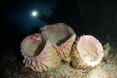 Raja Ampat - Misool region (cathm2) Tags: travel indonesia underwater scuba diving rajaampat misool arenui