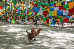 Amdo & Kham (tsemdo.thar) Tags: buddhism tibet         tsemdo