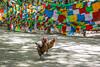 Amdo & Kham (tsemdo.thar) Tags: buddhism tibet 西藏 青藏高原 藏族 高原 藏区 吐蕃 བོད དར་ལྕོག tsemdo བོད་ལྗོངས བོད་ཡུལ རླུང་རྟ 世界屋脊 མདོ་ཁམས
