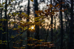 """Autumn ("""" Bernhard Witt """") Tags: autumn alpha850 vision:sunset=0549 vision:plant=0594 vision:clouds=0514 vision:outdoor=0696 vision:sky=0944"""