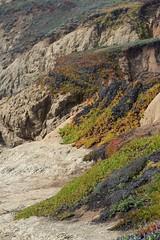 Coastal Plants (karlsbad) Tags: marinheadlands karlsbad karlschultz