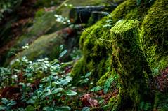 Squamish Park (Kristian M Armstrong) Tags: nature moss stump squamish