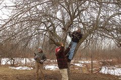 "Apple Pruning: A Group Effort <a style=""margin-left:10px; font-size:0.8em;"" href=""http://www.flickr.com/photos/91915217@N00/13528203735/"" target=""_blank"">@flickr</a>"
