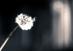 Moment of Clarity (Eric_Do_) Tags: sunlight flower fly peaceful dreamy emotional chill daniellon