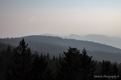 On Top of the Bavarian Forest IV (Misterfie Photography) Tags: nature forest germany landscape bayern deutschland bavaria natur landschaft wald bayerischerwald bavarianforest baumwipfelweg