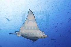 2014 03 VOISIN MALDIVES-7463