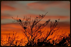 Sunset West Auckland (Zelda Wynn) Tags: sunset orange tree nature weather cloudscape troposphere newlynn birdssinging zeldawynnphotography