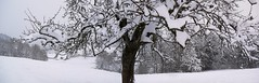 Bachtel, Kt. Zürich Lumix GF-1  12.2012  Panorama (Swiss.Piton (BH&SC)) Tags: bachtel zürich gf1 schweiz schnee swiss switzerland panorama panasonic panoramic snow snowtrekking suisse landscape swisslandscape helvetia green countryside mountain skyway view travelerphotos supershot impressedbeauty diamondclassphotographer flickrdiamond superbmasterpiece aplusphoto colorphotoaward myswitzerland svizzera flickr suisia suiza suizo imagesforthelittleprince music geripitonbike niceshot ibringmycameraeverywhere ilovephotografie flickrphotographer theworldthroughphotography justmeandmycamera shotforfun photography beautifulshot