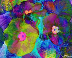 Impressionist Primulas (maureen bracewell) Tags: flowers abstract digitalart colourful impressionist textured maureenbracewell saariysqualitypictures