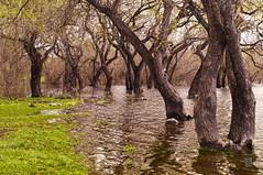 Races (@moshe_silva ) Tags: chile naturaleza verde nature rboles south rbol sur villarrica