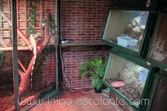 Blog: Planes para el fin de semana en familia con nios: Visita al refugio de animales Basondo en Kortezubi (Iigo Escalante) Tags: naturaleza animals fauna zoo nios animales bizkaia euskadi vizcaya paisvasco gernika animaliak basondo kortezubi santimamie planesconnios refugiodeanimales planesenfamilia