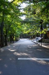 Shady Nara Street (pokoroto) Tags: street autumn japan october  nara kansai shady 2014 10    naraprefecture  kannazuki   themonthwhentherearenogods 26