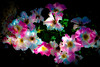 "Rose Galaxy - (explored) Flickr Explore – Feb.  17,2015 (Jack o' Lantern) Tags: flowers roses flower rose wonderful visualart photomania masterphotos world100f ""exoticimage"" mixofflowers rosegalaxy"