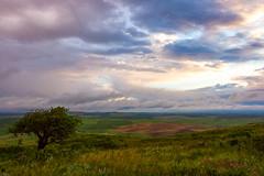 _MG_0103-Edit (Scott Donschikowski) Tags: statepark tree clouds sunrise washington rollinghills wheatfields palouse steptoebutte scottdonschikowski