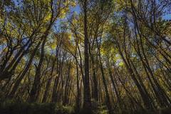 A shadow on the road... | Una sombra en el camino... (maf.mendoza) Tags: trees shadow espaa naturaleza sun tree sol nature forest landscape spain nikon rboles sunny asturias sombra paisaje shades bosque rbol sombras airelibre soleado cangasdelnarcea besullo nikond7200 bisuyu nikkorafsdx1680mmf284eedvr