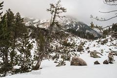 Llanos del Hospital, Benasque (Jose Antonio Abad) Tags: espaa naturaleza tree nature spain huesca nieve paisaje rbol lanscape benasque aragn pblica josantonioabad