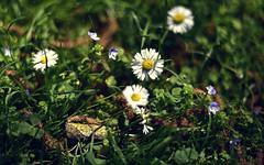 Flower (Andreas Mezger - Art Photography) Tags: flowers summer orange green beautiful grass 50mm nikon dof bokeh 14g d810