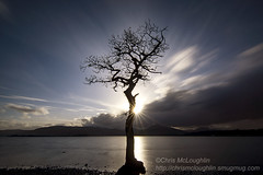The lone tree at Milarrochy Bay (Chris McLoughlin) Tags: landscape scotland sony lochlomond milarrochybay sonyimages a77v sonya77v