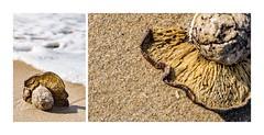 Beach al funghi, with a side of sea foam! (red stilletto) Tags: ocean sea macro texture beach mushroom sand funghi apollobay colourpalette colourpalettes apollobaybeach apollobayvictoria colourpalettescoast