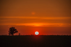 Sunset 524 (Larry Senalik) Tags: sunset sky sun tree clouds canon fence landscape evening illinois spring dslr t3i 2016