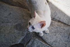 (marirenaa) Tags: street pet white animal cat kitty greece volos