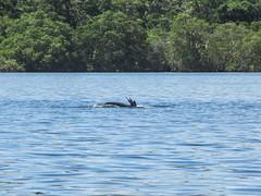 """Bahia de los Dolfines: un dauphin et visiblement un oiseau qui plonge juste à côté. Pas fait exprès ;) <a style=""""margin-left:10px; font-size:0.8em;"""" href=""""http://www.flickr.com/photos/127723101@N04/27058380210/"""" target=""""_blank"""">@flickr</a>"""