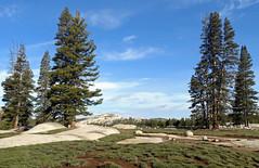On top of the World, Yosemite NP 2015 (inkknife_2000 (6.5 million views +)) Tags: california usa mountains landscapes meadow skyandclouds yosemitenationalpark tuolumnemeadows easternsierranevada granitedome sprucetrees dgrahamphoto