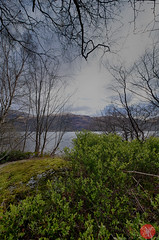 On the way to Skye 4 (Kasia Sokulska (KasiaBasic)) Tags: trees lake mountains landscape scotland spring highlands loch lomond inveruglas fujix