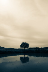 lonely tree (dobromir.dimitrov) Tags: sky tree water monochrome clouds pond nikon sigma lonely toned splittone d7100