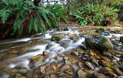 Liffey Falls Creek. (Billy Avery Photo) Tags: longexposure motion fern nature water creek canon river waterfall moving rocks exposure sigma falls liffey motionblur riverbed tasmania ferns tas aus 1020mm shrubbery discover liffeyfalls 600d discovertasmania