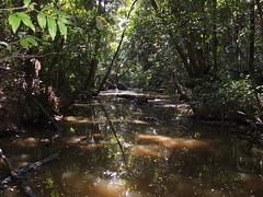 DSCF6428 (SEQ Catchments) Tags: rainforest subtropical lowland