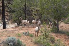 IMG_5787.jpg (scott_bohaty) Tags: season utah nationalpark spring state time location zion