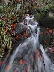 Water (M1220552 E-M1 7mm iso200 f11 0.4s) (Mel Stephens) Tags: uk autumn water scotland waterfall rocks solitude angus olympus pro modified omd em1 2015 m43 q4 714mm mirrorless microfourthirds mzuiko 201511 20151122