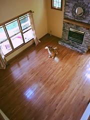 Don't leave me! (JenWaller) Tags: wood dog moving mutt floor emptyroom travis woodfloor
