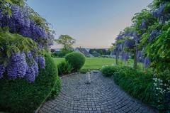 Evening view (2) (frankmh) Tags: summer garden evening skne sweden outdoor wisteria hittarp