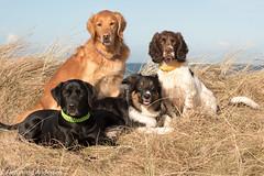FAN_5257.jpg (Flemming Andersen) Tags: dogs denmark dk snedsted northdenmarkregion helligsvej