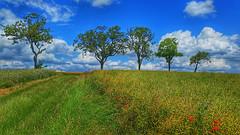 It's summer! (RainerSchuetz) Tags: summer trees clouds field poppies