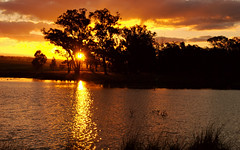 sunset (kangkang300402) Tags: sunset weather sun sunray glow sunlight cloud sky tree silhouette gumtree fence post grass water dam ripple reflection duck wildduck color red yellow black white stockphoto stockphotography