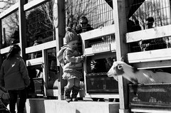 Childen and goats (dpsager) Tags: bw film goat brookfield eos1v fujineopan400 canoneos1v dpsagerphotography