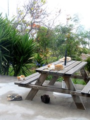 IMG_1759 (Chat Malicieux) Tags: cats table siesta tisch katzen ktzchen