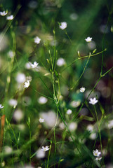 (Tamara Magomedova) Tags: flowers light summer plant blur detail macro green nature colors field grass leaves fairytale season landscape flora soft bright bokeh outdoor downhill flare dreamy wildflowers blooms magical shining depth catchy sparkling shimmering helios44 helios442