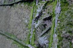 matcha moss (yolandayay) Tags: city texture rock stone wall closeup hongkong moss outdoor lining
