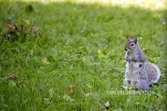 IMG_4616eFB (Kiwibrit - *Michelle*) Tags: tree grass birds woodpecker squirrel maine feeder chipmunk monmouth 2016 061916
