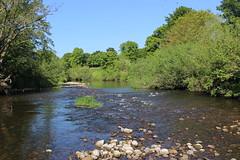 river wear (kokoschka's doll) Tags: river wear trees batts bishopauckland