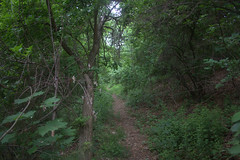 Forest Path (Br. Clement, O.P.) Tags: trees tree forest river outside outdoors path newhampshire nashua nashuariver