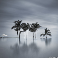 7 palmeras (Moises Levy L) Tags: longexposure blue trees sky bw color water palms long exposure acapulco plm moiseslevy sonya7r